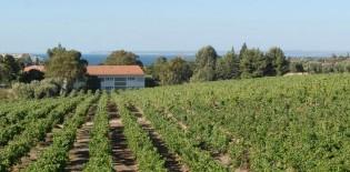 A Vinha e o vinho de Carcavelos